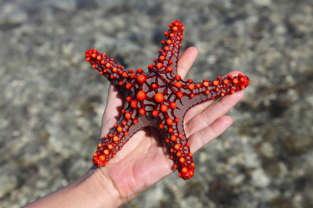 A hand holding a starfish